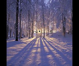 Božični les